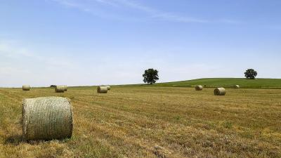 Φάρμα Κουκάκη - Καλλιέργεια  αγνών ζωοτροφών στον κάμπο κάτω Αποστόλων του Κιλκίς