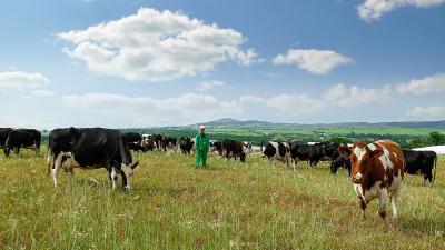 Φάρμα Κουκάκη - Παραγωγή αρίστης ποιότητας γάλακτος
