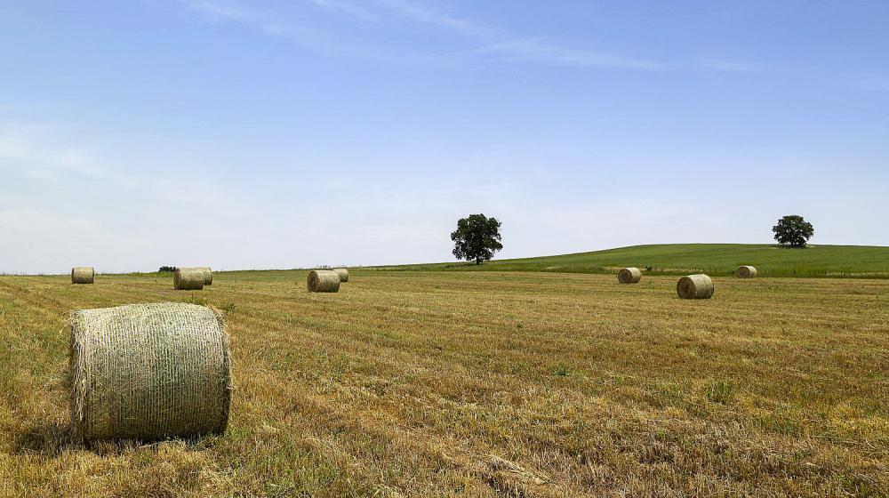 Καλλιέργεια αγνών ζωοτροφών στον κάμπο των Κάτω Αποστόλων του Κιλκίς
